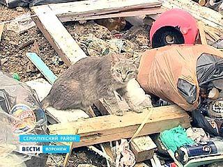 В поселке Стрелица некому вывозить бытовые отходы