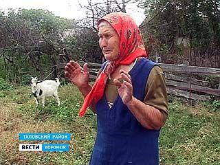 В посёлке Осиновый алабай покусал 75-летнюю старушку
