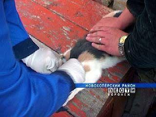 В Поворинском районе идет активная вакцинация против бешенства