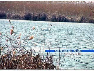 В Поворинском районе кипят страсти вокруг озера Ильмень