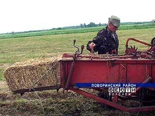 В Поворинском районе сенокос решили сделать частью сельхозработ