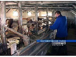 В рамках нацпроекта в Кантемировском районе выдано более ста кредитов