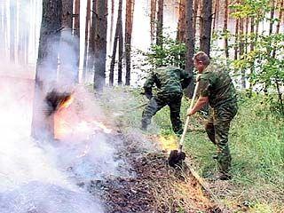 В районе полигона в Погоново горел лес