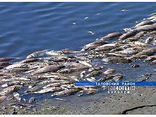 В реке Сухая Чигла зафиксирован замор рыбы