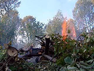 В Роще на улице Жукова вырубали деревья и сжигали кустарники