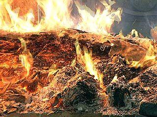 В Россошанском районе в пожаре погибли около 700 свиней