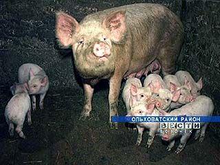 В селе Анцеловичи модернизируют свиноводческий комплекс