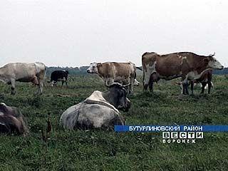 В селе Гвазда держать домашний скот стало накладно