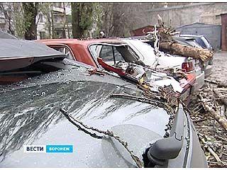 В Северном районе дерево упало сразу на 5 автомобилей