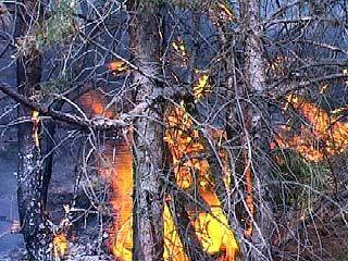 В Сомовском лесхозе произошел крупный пожар