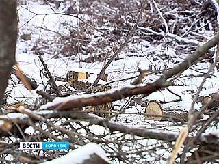 В Советском районе возбуждено уголовное дело по факту вырубки около 400 деревьев