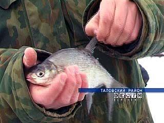 В Таловой прошли соревнования по подледному лову рыбы