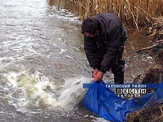 В Таловском районе оживили уже 33 пруда