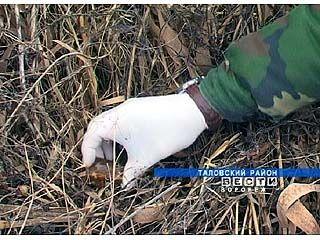 В Таловском районе прививают лис от бешенства