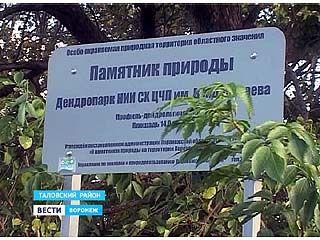 В Таловском районе вымирает уникальный арборетум Каменной степи