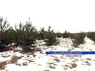 В текущем году вырубка елей и сосен приняла угрожающие масштабы