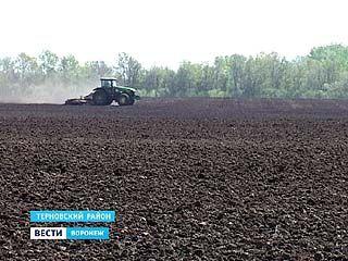 В Терновском районе из-за урагана готовятся пересевать свеклу