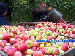 В Терновском районе некому убирать яблоки