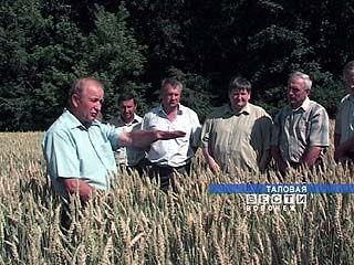 В трех районах области стартовала уборка зерновых