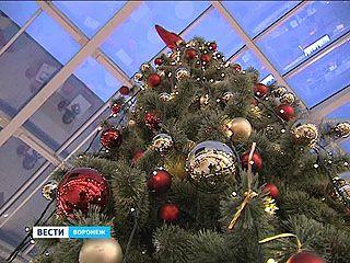 """В """"Центре Галереи Чижова"""" зажглась главная новогодняя ель"""