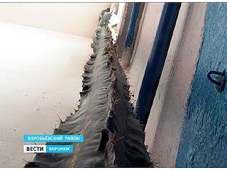 В Воробьевском районе вырастили кактус высотой с двухэтажный дом