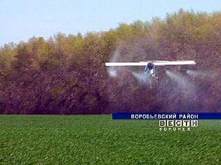 В Воробьёвском районе ведут обработку всходов силами малой авиации