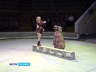 В Воронеж приехала московская цирковая программа