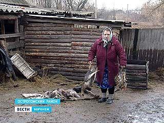 В Воронеже и районах области подсчитывают убытки от большой воды
