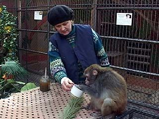 В Воронеже ищут применение отслужившим ёлкам