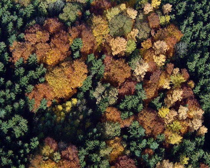 В Воронеже может появиться национальный парк