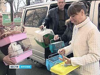 В Воронеже начались дни защиты от экологической опасности
