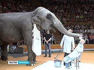 В Воронеже начались гастроли национального будапештского цирка