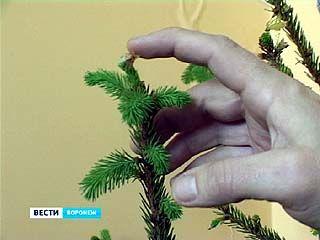 В Воронеже новогодняя ёлка дала новые побеги