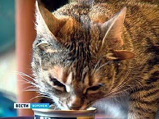 В Воронеже обнаружена мировая сенсация - пятиухая кошка