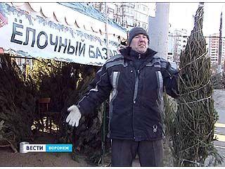 В Воронеже официально открылись специализированные елочные базары