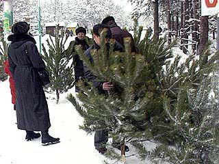 В Воронеже официально заработали елочные базары