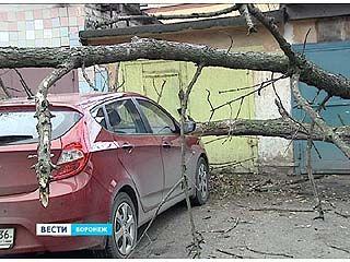 В Воронеже подсчитывают убытки после минувшей ветряной ночи