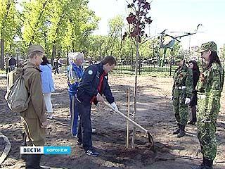 В Воронеже появилась Аллея ветеранов