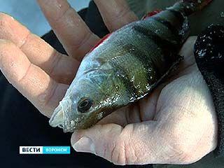 В Воронеже прошёл ежегодный фестиваль рыболовного спорта