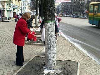 """В Воронеже прошла акция """"Чистый город"""""""