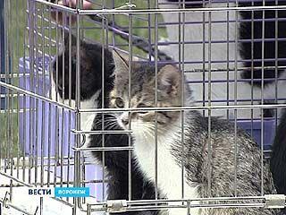 В Воронеже прошла акция по раздаче бездомных животных
