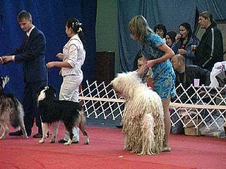 В Воронеже прошла Международная выставка собак