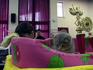 В Воронеже прошла выставка кошек