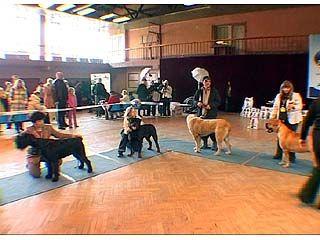 В Воронеже прошла выставка собак редких пород
