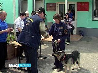 В Воронеже прошли областные соревнования собак-поисковиков