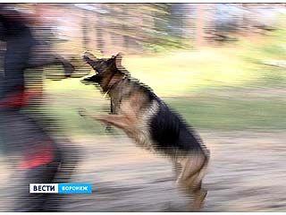 В Воронеже прошли соревнования среди телохранителей