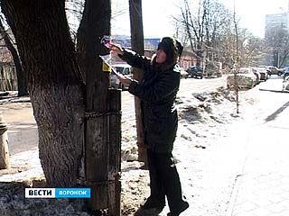 В Воронеже стартовал месячник благоустройства