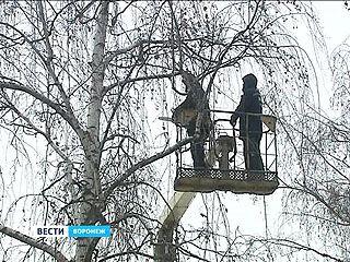 В Воронеже стартовала санитарная опиловка деревьев