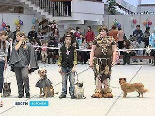 В Воронеже уже в восьмой раз прошёл большой парад собак