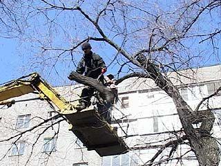 В Воронеже в массовом порядке проводят опиловку деревьев